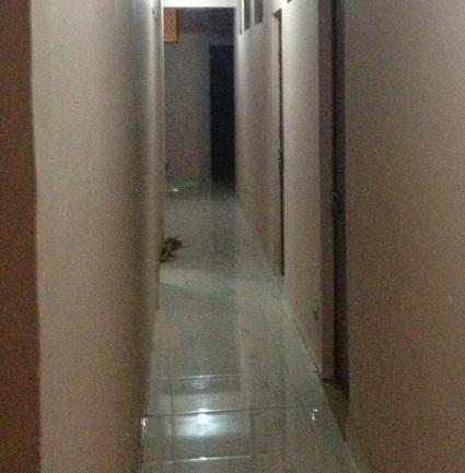 Image 5 Furnished room to rent in West Delhi, Delhi Studio bedroom Apartment