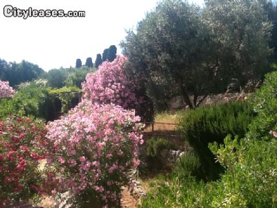 Image 2 furnished 2 bedroom Apartment for rent in Monte Argentario, Grosseto
