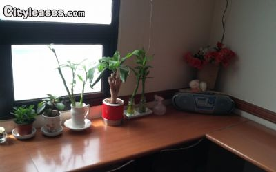 Image 9 Furnished room to rent in Bucheon, Gyeonggi 5 bedroom House