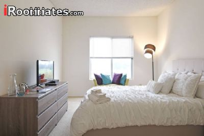 Image 5 Furnished room to rent in Westchester, West Los Angeles 2 bedroom Apartment