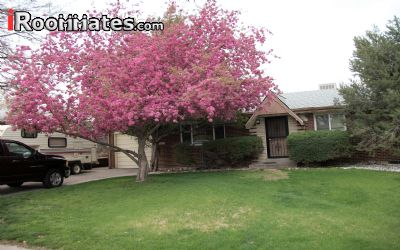 $650 room for rent Westminster Adams County, Denver Area