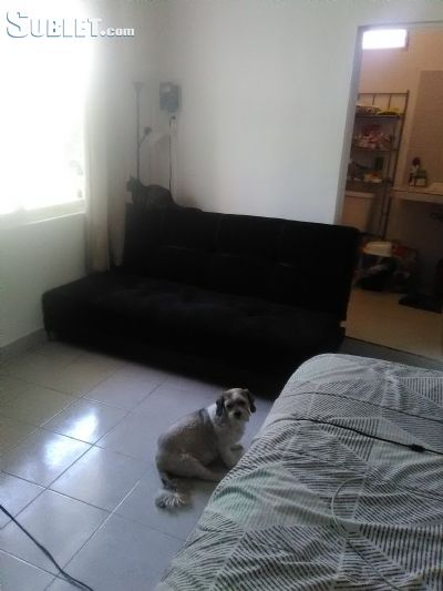 Image 7 furnished Studio bedroom Apartment for rent in Cozumel, Quintana Roo
